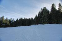Le Bois d_Artigous, droit devant