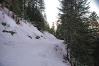 Le chemin dans le Bois d'Artigous