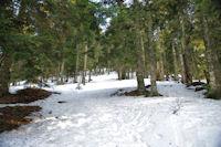 Dans le Bois d'Artigous