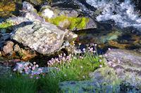 Le Labas fleuri