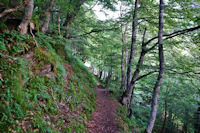 Le chemin sous la sapiniere d'Estousou