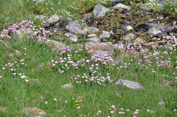 Le vallon d_Ausseilla fleuri
