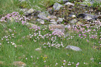 Le vallon d'Ausseilla fleuri