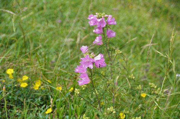 Jolies fleurs sous le Cap de Hite