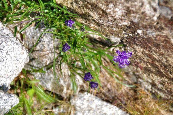Jolies fleurs accroc