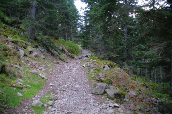 Le chemin dans la sapinière de Bédout