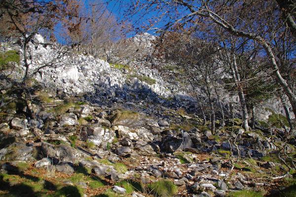 La montée au Pic de Navaillo dans les bois