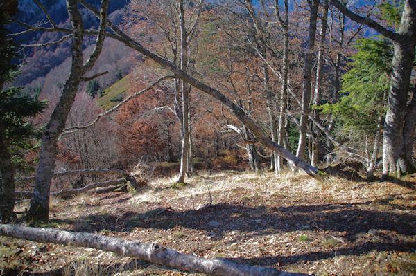 En descendant du Pic de Navaillo dans la forêt dévastée par la tempête Klaus