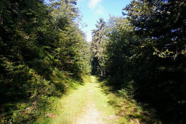 Le chemin sous le Soum de Berducou