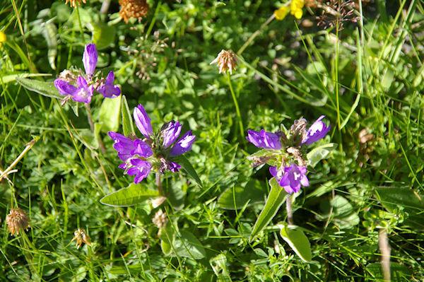 Jolies fleurs violettes, mais lesquelles?