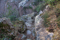 Le chemin sous Mauba