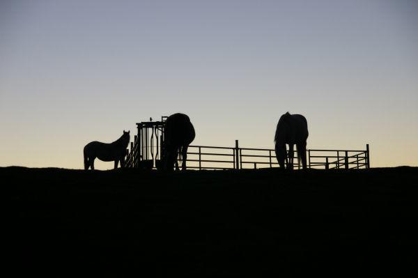 Des cheveaux au levé du soleil entre le Tucoy et le Pic Arraillé