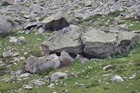 Une toue dans la vallee du gave de Cambales