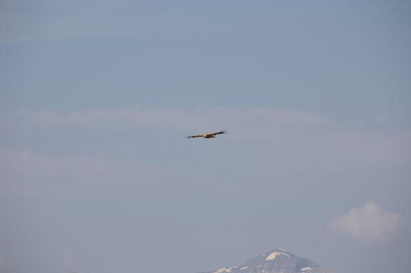 Un habitant du coin sur fond de Mont Perdu