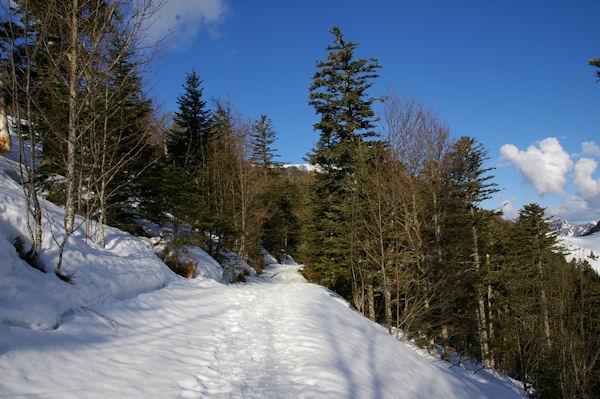 Le chemin montant au Col de Bazès