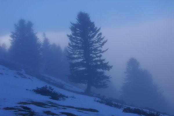 Pins dans la brume sous le Cap Nestès