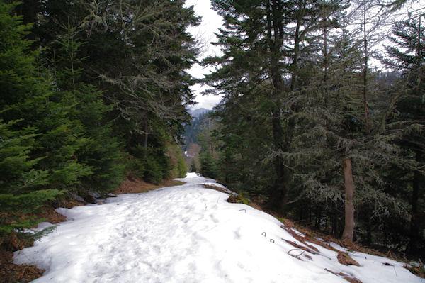 Le chemin dans le Bois de la Plape
