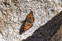 Papillon perdu