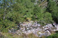 Le ruisseau de Lassiedouat