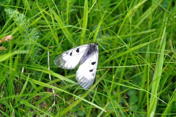 Joli papillon