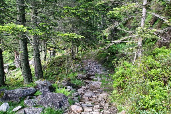 Le sentier descendant vers la porte du Parc National