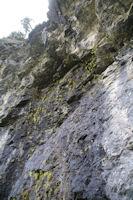 Barre rocheuse remplie de plantes carnivores ressemblant aux Grassettes