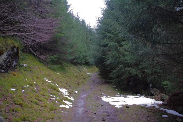 Le chemin dans le bois d_Estagnet
