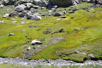 Zone humide pres du ruisseau d'Estaragne