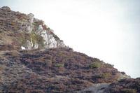 Un isard sur la crete, un peu avant le Pic d'Estibete