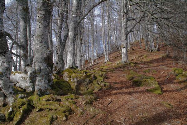 La forêt sous le Roc de Manoula