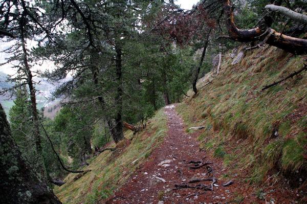 Le Bois d_Arribama