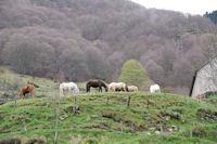 Jolis chevaux pres du Pont de Brioule
