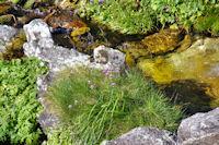 Le ruisseau sous le Lac Nere