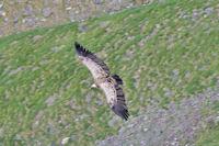 On arrive même à voir les vautour par dessus!
