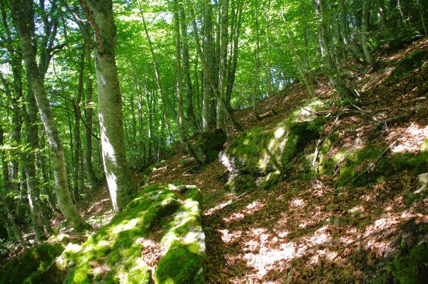 Le bois au dessus de Campla