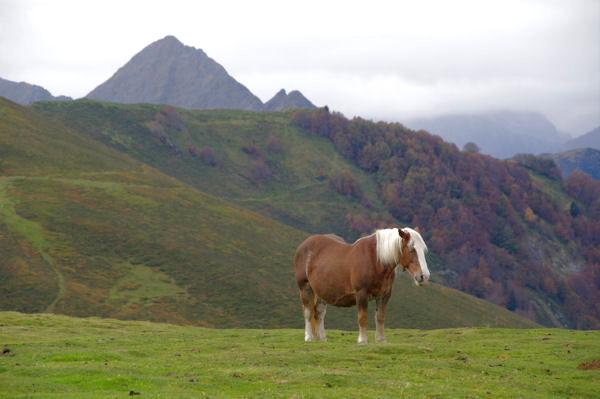 Depuis le Soum de Tramassel, au fond, le Pic de Viscos, à droite, le Bois de Mailh Blanc