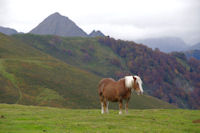 Depuis le Soum de Tramassel, au fond, le Pic de Viscos, a droite, le Bois de Mailh Blanc