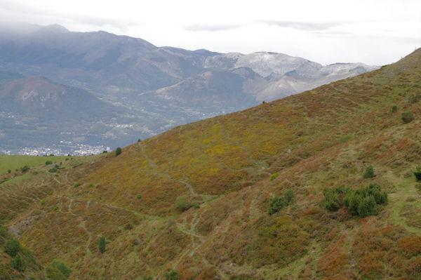 Des genets en fleur à Hourquet, Argelès Gazost dans la vallée
