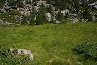 La pelouse parsemee d&#39Orchidees