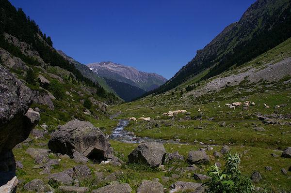 La vallée du Gave d&#39Arrens, au fond, les Gabizos