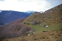 Le sentier menant au Bois de Laurouse