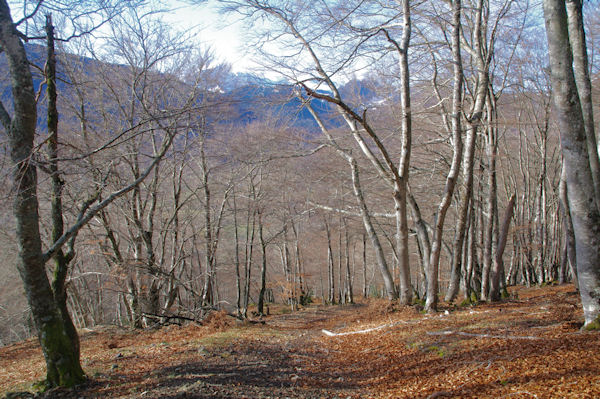 Dans le Bois de Laurouse