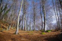 Dans le Bois de Laurouse, au dessus de Laurences