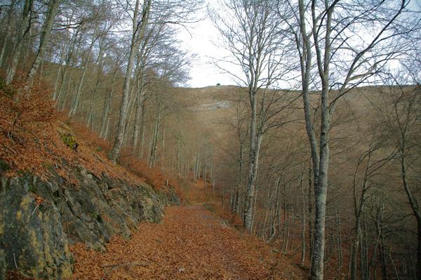 Le chemin dans le Bois des Pouzades
