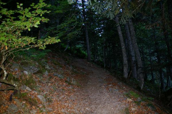 La forêt dense au dessus du pont de Plasi