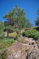 Joli chemin en arrivant dans le vallon du ruisseau de la Piarre