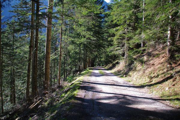 Le chemin au dessus du ruisseau de Péguère