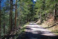 Le chemin au dessus du ruisseau de Peguere