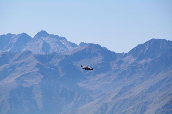 Un vautour fauve, derrière, le Turon de Néouvielle, le Pic des Trois Conseillers, Le Pic de Néouvielle…