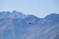 Un vautour fauve, derriere, le Turon de Neouvielle, le Pic des Trois Conseillers, Le Pic de Neouvielle…